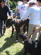 Bark in the Park2